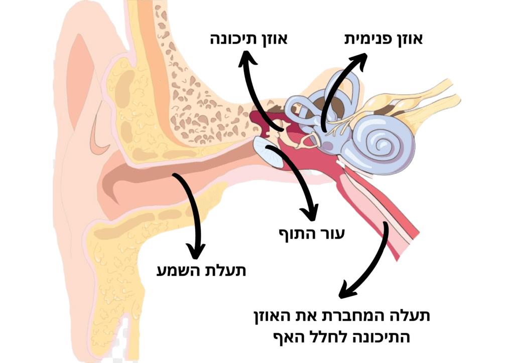 מבנה האוזן עם ביאור