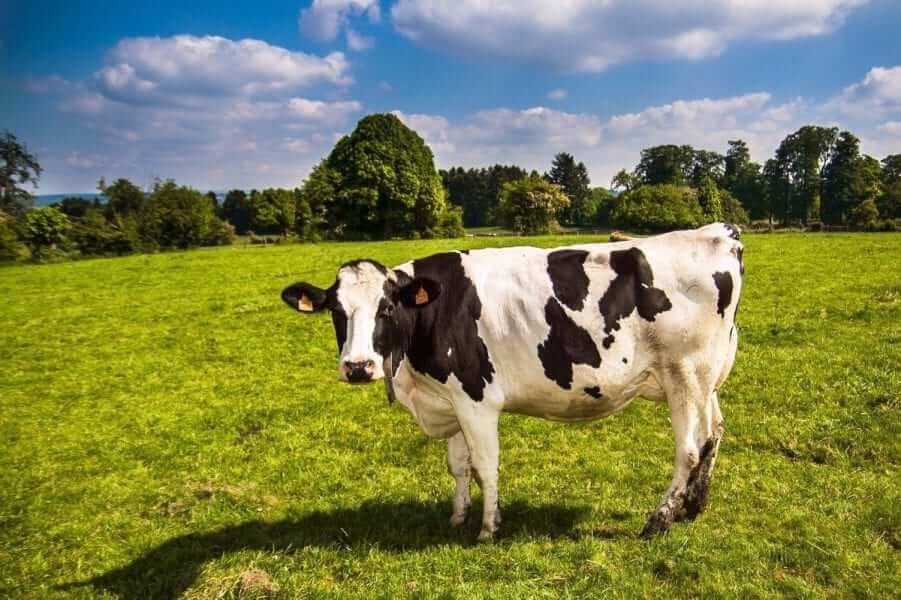 רגישות תינוקות לחלבון חלב פרה